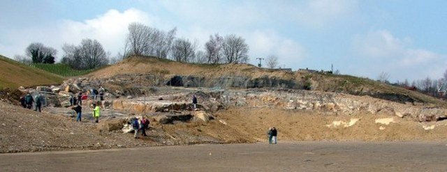 Brymbo Fossil forest