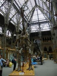 1OUMNH_Iguanadon Skeleton.JPG