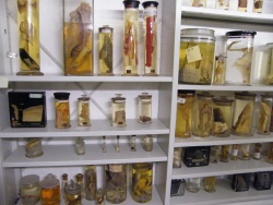 4OUMNH_Fluid Preserved Specimens.JPG