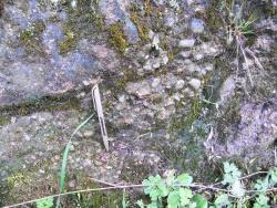 Carboniferous_Silurian-Boundary.JPG
