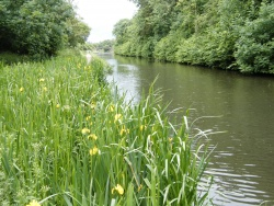 Dudley-Line-No.2-Canal.JPG