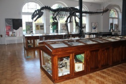 Lapworth-Museum_Main-Hall-1.jpg